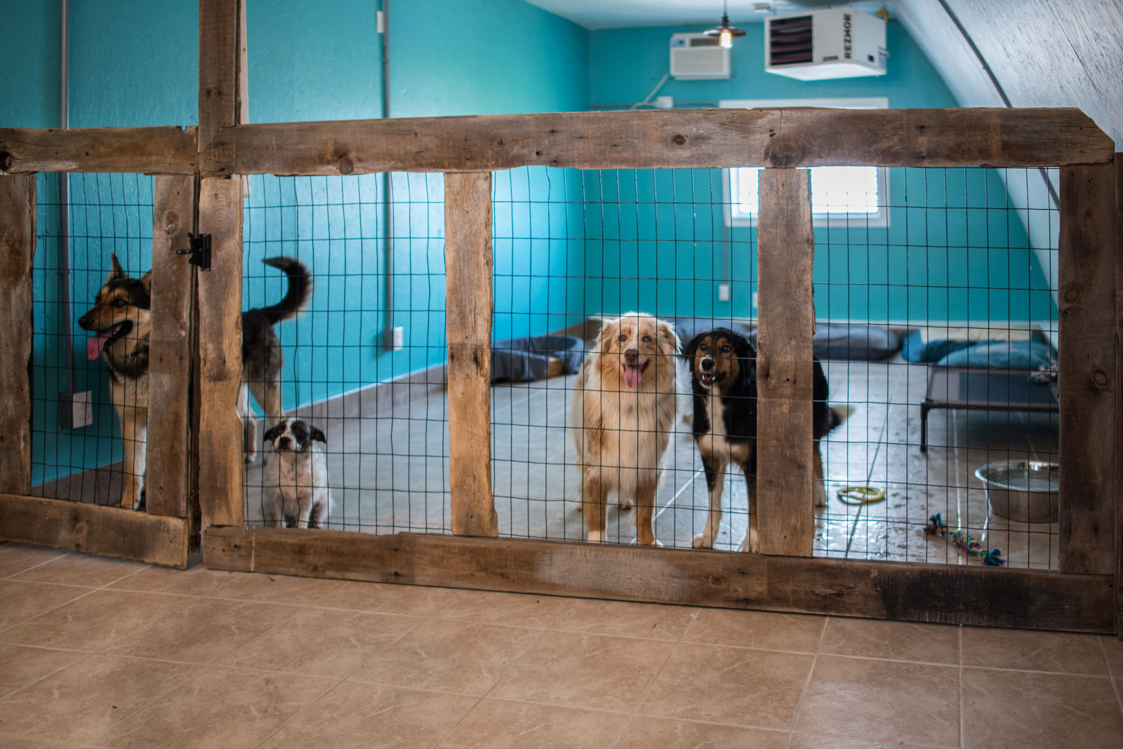 Dogs at day care