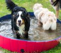 Dogs playing in water at Izy's DogHouse